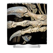 Saurophaganax Dinosaur Claw Fossil Shower Curtain
