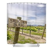 Sauvignon Blanc Grapes Growing In Vineyard Shower Curtain