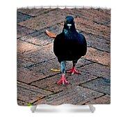 Savannah Pigeon Shower Curtain