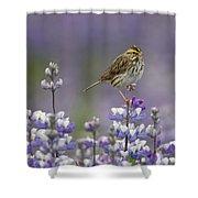 Savannah Sparrow And Nootka Lupine Shower Curtain