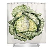 Savoy Cabbage  Shower Curtain