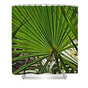 Saw Palmetto  Shower Curtain