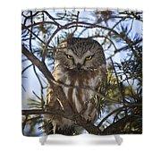 Saw Whet Owl Shower Curtain