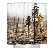 Sawback Burn, On Bow Valley Parkway Shower Curtain