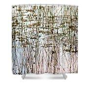 Sawgrass Swamp Panorama Shower Curtain