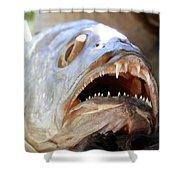 Fanged Fish Say Ahhhhhh Shower Curtain