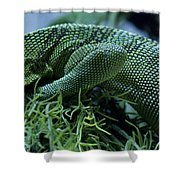 Scales Two Shower Curtain