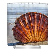 Scallop Shell 2 Shower Curtain