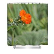 Scarlet Avens Orange Wild Flower Shower Curtain