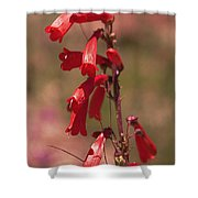 Scarlet Colorado Penstemons Shower Curtain