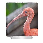 Scarlet Ibis 1 Shower Curtain