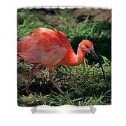 Scarlet Ibis Hybrid Shower Curtain