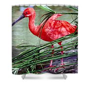 Scarlet Ibis Shower Curtain