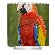 Scarlet Macaw Parrot Shower Curtain
