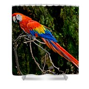 Scarlet Macaw Perched Shower Curtain