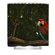 Scarlet Macaw Profile Shower Curtain