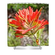Scarlet Paintbrush Along John's Lake Trail In Glacier Np-mt Shower Curtain