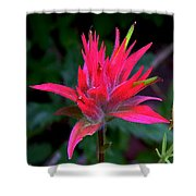 Scarlet Paintbrush On Swiftcurrent Pass Trail In Glacier National Park-montana Shower Curtain