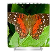 Scarlet Peacock Butterfly Shower Curtain