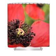 Scarlet Poppy Macro Shower Curtain