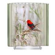 Scarlet Tanager 3630-10-ttp Shower Curtain