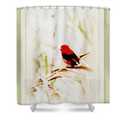 Scarlet Tanager 3630-12 Shower Curtain