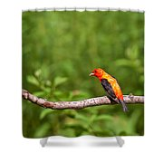 Scarlet Tanager On Snag Shower Curtain