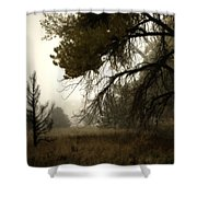 Scary Trees Shower Curtain