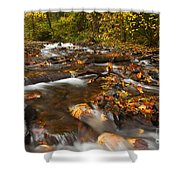 Scattered Leaves Shower Curtain by Mike  Dawson