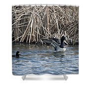 Scaup Show Off Shower Curtain