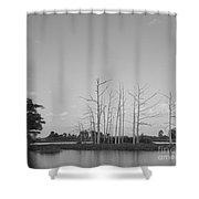 Scenic Swamp Cypress Trees Black And White Shower Curtain