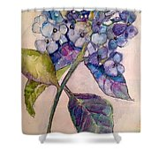 Scented Beauty Shower Curtain