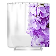 Scented Stocks Shower Curtain
