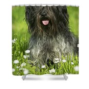 Schapendoes, Or Dutch Sheepdog Shower Curtain