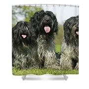 Schapendoes, Or Dutch Sheepdogs Shower Curtain