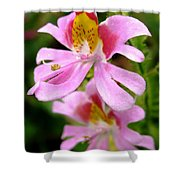 Schizanthus Named Angel Wings Shower Curtain