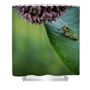 Schlitz Audubon Tree Frog Shower Curtain