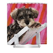 Schnauzer Puppy Looking Over Top Shower Curtain