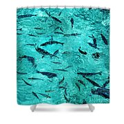 School Of Fishes In The Transparent Water Shower Curtain