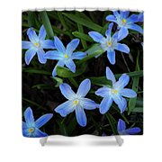 Scilla Flowers In The Morning Shower Curtain
