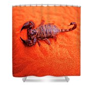 Scorpion Red Sand Sting Insect Shower Curtain