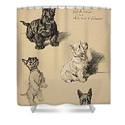 Scotch Terrier And White Westie Shower Curtain