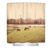 Scottish Highland Cattle Shower Curtain