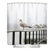 Screaming Seagull Shower Curtain