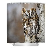 Screech Owl Checking You Out Shower Curtain