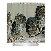 Screech Owl Chicks Shower Curtain