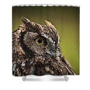 Screech Owl 1 Shower Curtain