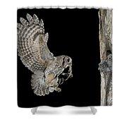 Screech Owl Feeding Owlets Shower Curtain