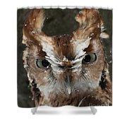 Screech Owl Portrait Shower Curtain