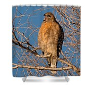 Screeching Red-shouldered Hawk Shower Curtain